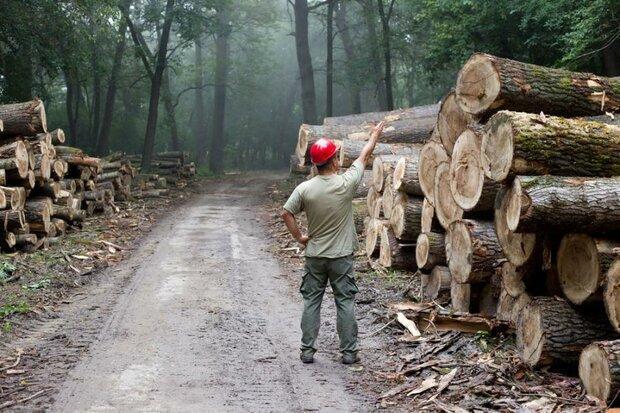 استفاده بی رویه کاغذتوالت در آمریکا، تهدیدی برای جنگل های کانادا